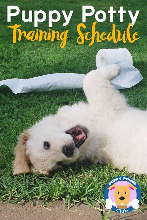 Puppy Potty Training Schedule