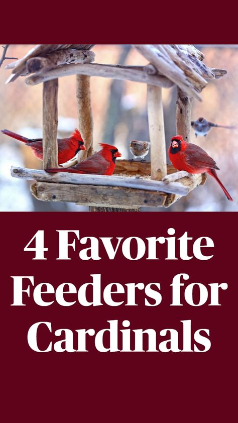 4 Favorite Feeders for Cardinals