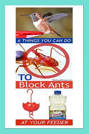 Block Ants At Your Hummingbird Feeders Humming Bird Feeders Hummingbird Food Ants