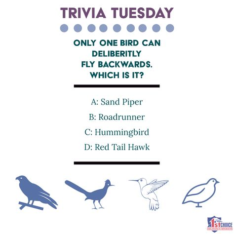 #TriviaTuesday     www1stChoiceInsurnceBrokers.com Give us a like @ #1stchoiceinsurancebrokers