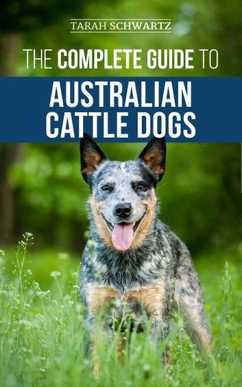 The Complete Guide To Australian Cattle Dogs Finding Trai In 2020 Australian Cattle Dog Cattle Dog Cattle Dogs Training