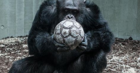 Fussball Sprüche Vor Dem Spiel