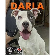 Darla Forgotten Tails Inc Bloomfield New Jersey Pets
