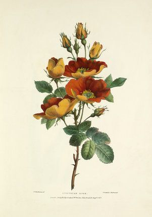 Pin On Vintage Herbarium