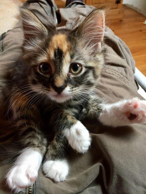 Chloe Says Hi Reddit Http Ift Tt 2fes8zm Funny Cat Pictures