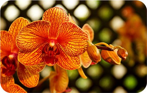 Flower Meanings Orchid Symbolism On Flower Meanings Orchids Flowers