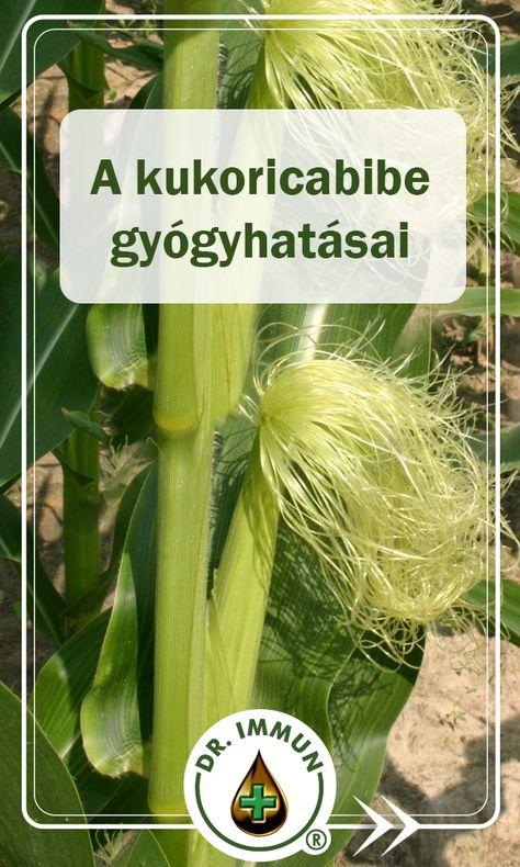 boszorkány gyógynövények fogyás)