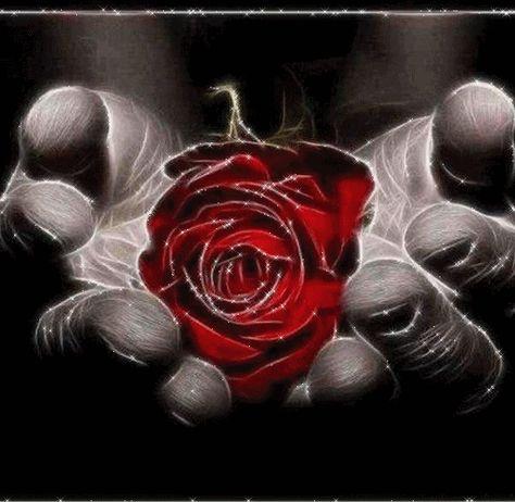 Photo Fleur Allah Photo Fleurs Fleurs Photo Profil