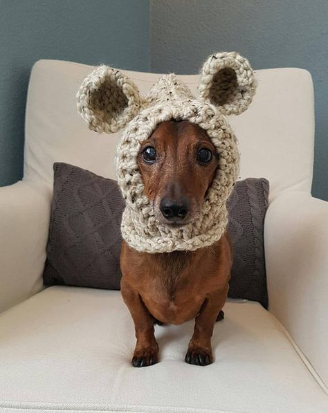Keep your furry friend warm and cozy in this cute bear hood! Perfect for those chilly fall and winter walks or use as a costume. Handmade with chunky yarn in Oatmeal. Model is a Miniature Dachshund weighing approx. 12.5lbs and is wearing size Medium. Size Small will fit smaller Dachshunds and other small breeds. Size Medium will fit breeds such as Shi Tsu, Beagle, Westie, etc. Size Large will fit large breed dogs - tested on a Great Dane