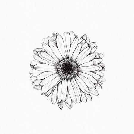 Gerbera Drawing Inkylines May 2017 Adrawingaday With Images