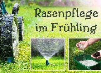 Rasenpflege Im Fruhling Mahen Und Dungen Im Marz Rasenpflege Fruhling Rasenpflege Rasen