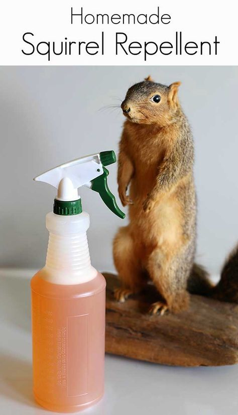 Homemade Squirrel Repellent Recipe