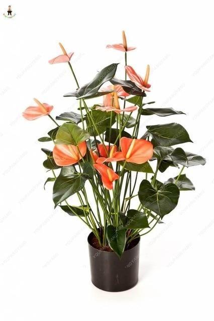 Hot Sale 50pcs Anthurium Plants Beautiful Rainbow Anthurium Garden Flowers High Survival Rate Bonsai Tree Garden Decoration Anthurium Plant