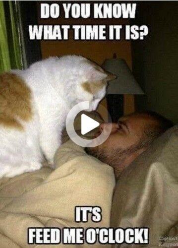 Funny Cat Meme Feed Me O Clock Fridge Magnet 5 X 3 5 Ebay Funny Cats Cat Memes Funny Dogs