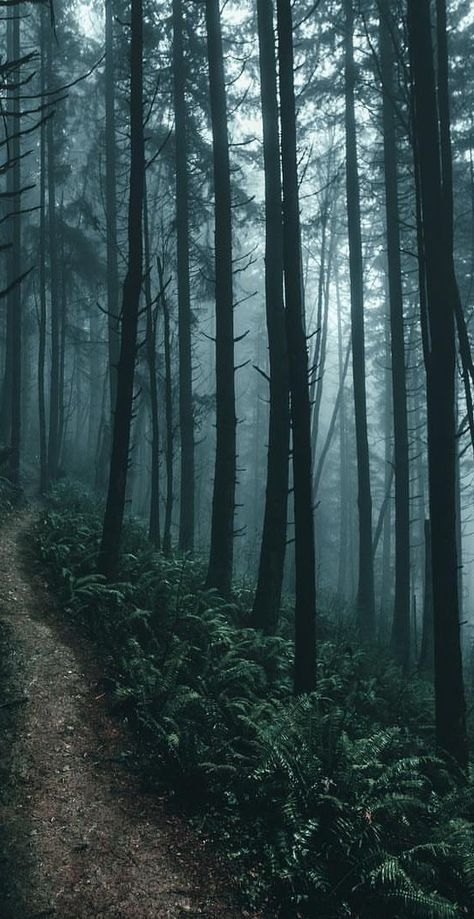 Lost In The Wood Aesthetic 27 Ideas Outdoors In 2020 Landscape Photography Nature Photography Lost In The Woods