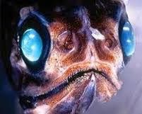 Afbeeldingsresultaat voor marianentrog fish