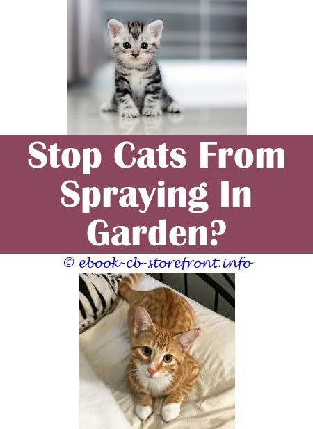 3 Amazing Cool Tricks Make Cat Stop Spraying Is A Male Cat Less Likely To Spray If Neutered How To Stop Cats From Spraying My Car Breeding Cat Aerosol Sensible