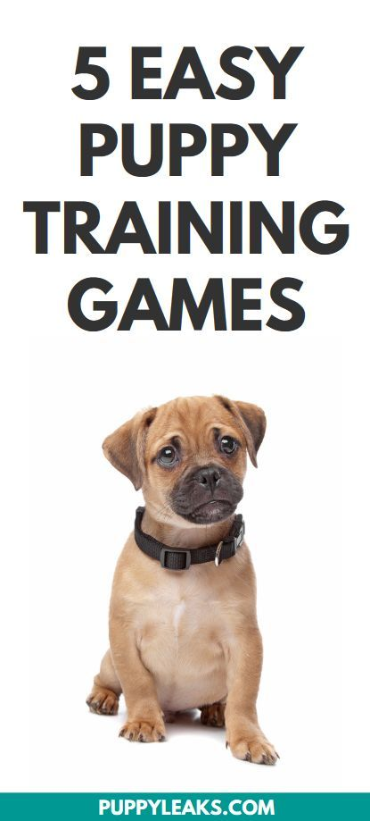 5 Easy Puppy Training Games Dog Training Tips Advice Games
