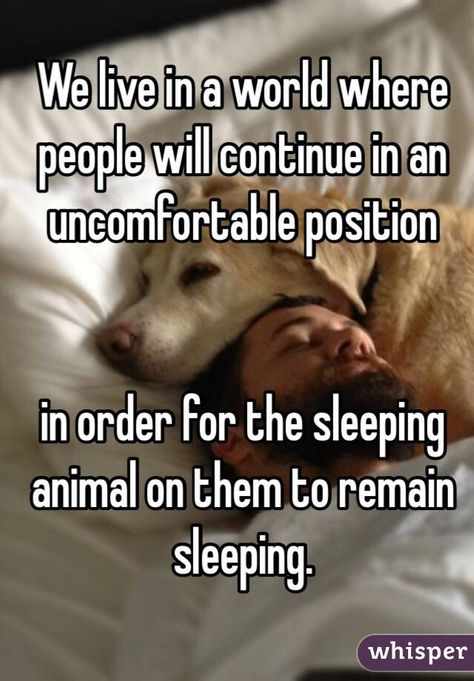 We live in a world where people will continue in an uncomfortable position  in order for the sleeping animal on them to remain sleeping.