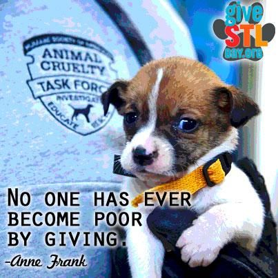 Embedded Image Permalink With Images Animal Rights Organizations Animal Conservation Humane Society