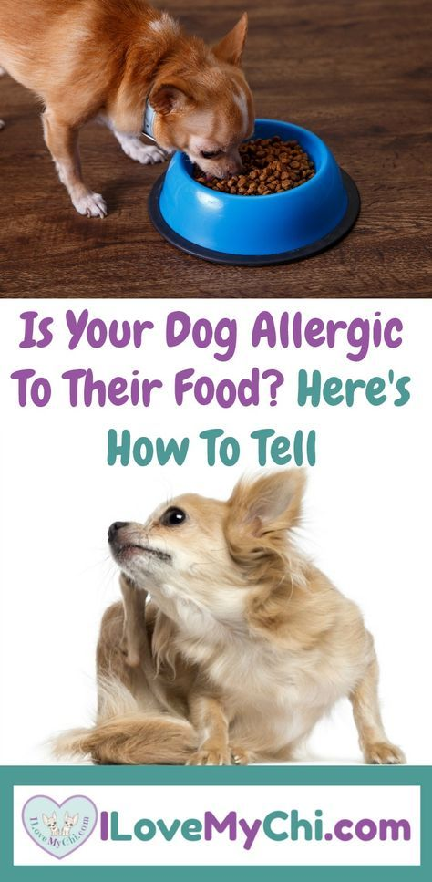 Is Your Dog Allergic To Their Food Here S How To Tell Your Dog