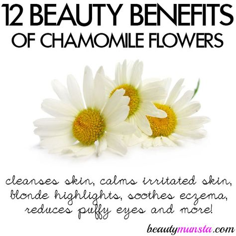 12 Beauty Benefits Of Chamomile Flowers For Skin Hair More Beautymunsta Free Natural Beauty Hacks And More Chamomile Flowers Natural Beauty Tips Silky Skin