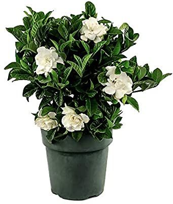 Pin On Live Plants From Amazon
