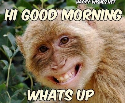 Funny Good Morning Quotes Saturday 28 Ideas For 2019 Funny Good Morning Memes Funny Good Morning Quotes Morning Humor