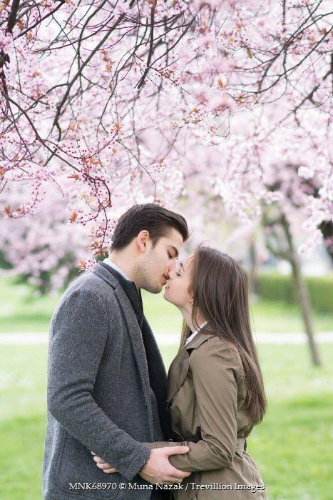Muna Nazak Couple Kissing Under Cherry Blossom Trees Couples Cherry Blossom Tree Blossom Trees Cherry Blossom