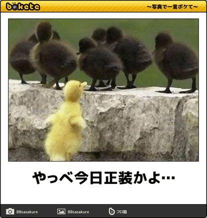 閲覧注意 小一時間笑える ボケて ここ2週間笑ってない人は集合 Naver まとめ 面白い画像 おもしろい画像 ボケて 爆笑画像