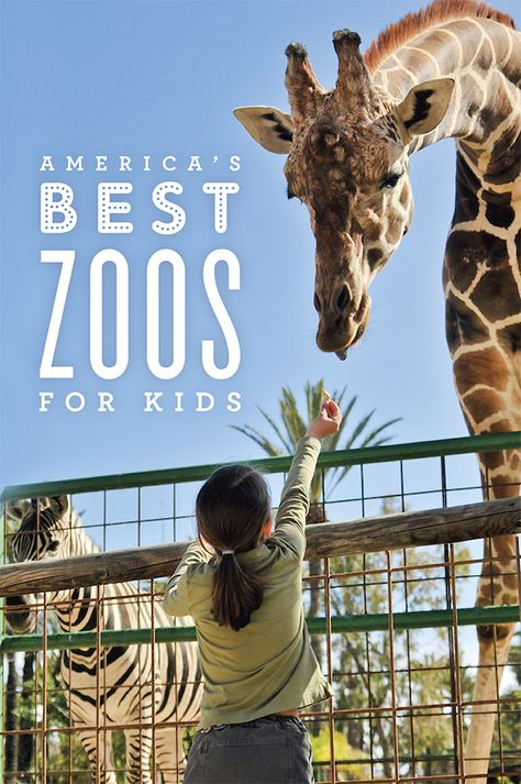 Best Zoos Over The World Images On Pinterest Zoos Animals - The 12 best zoos in the world