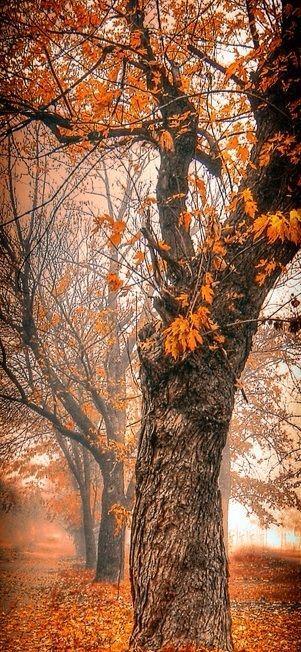 50 Best 4k Wallpapers In 2020 Autumn Morning Foggy Morning Landscape