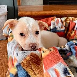 Available Pets At Nickel City Canine Rescue In Williamsville New