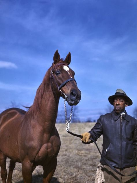 The Eighth Pole: Life and legacy of famed racehorse Man o' War The Belmont Stakes, Kentucky Horse Park, Horse Story, American Pharoah, Man Of War, Sport Of Kings, Thoroughbred Horse, Racehorse, Horseback Riding