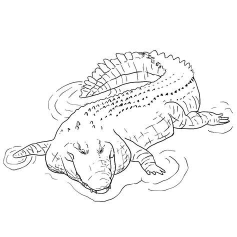 Pin Op Krokodilletjes