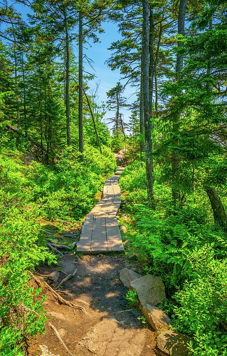 Acadia Hike Crooked Trail By Aaron