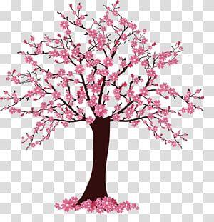 Cherry Blossom Tree Illustration Cherry Blossom Tree Sakura Tree Transparent Background Pn Cherry Blossom Watercolor Flower Illustration Cherry Blossom Tree