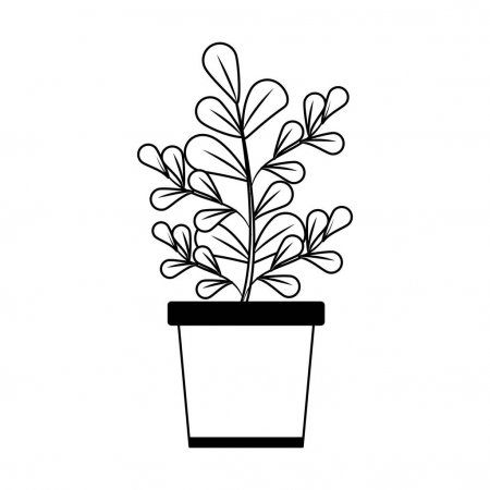 Plant In Pot Isolated In Black And White Stock Vector