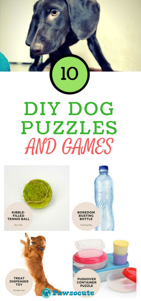 DIY dog puzzles and games Make the Best Dog puzzle toys, dog games, boxes, that are simple or challenging! Try one of these DIY Homemade dog puzzle toys. BOOST Your Dog's Mind! Games For Puppies, Brain Games For Dogs, Dog Games, Positive Dog Training, Basic Dog Training, Training Your Puppy, Training Dogs, Diy Tumblr, Dog Enrichment