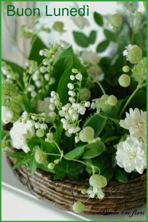 Fiori Bianchi Primavera.Buon Lunedi Coi Fiori Immagini Bellissime E Gratis 32 Fiori