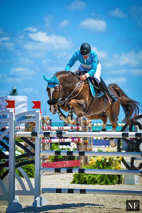 Cute Horses, Horse Love, Beautiful Horses, Palomino, Tour Eiffel, Dressage Videos, Cute Horse Pictures, Show Jumping Horses, Horseback Riding Outfits