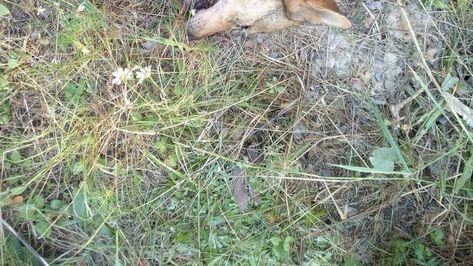 Петиция · Генеральная прокуратура РФ: Живодерная Кущевка в Тюменской области · Change.org