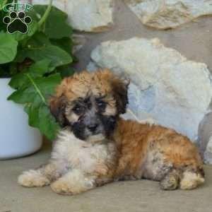 Puppies For Sale Under 500 Price Under 500 Golden Retriever