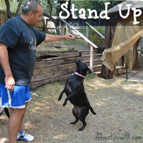 simple dog tricks stand up  dog hacks dogs training