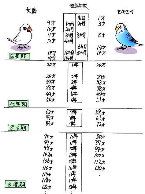 汐崎隼 日々のさえずり On Twitter ペットの鳥 可愛い鳥のまとめ 動物 図鑑