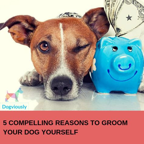 5 Compelling Reasons To Groom Your Dog Yourself Dogs Dog Care