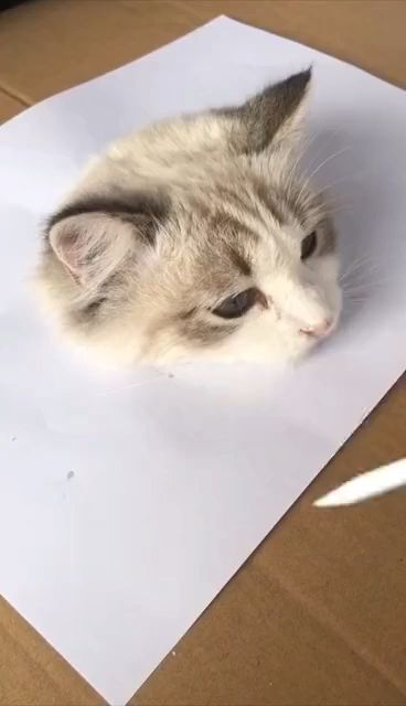 Gato asomándose de una hoja.