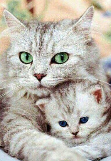 Cute Cat Pictures Adorable Kitten Kitten Nette Katze Stellt