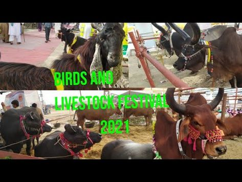 Birds and Livestock Festival 2021 at By Pass Hyderabad Pt.2.