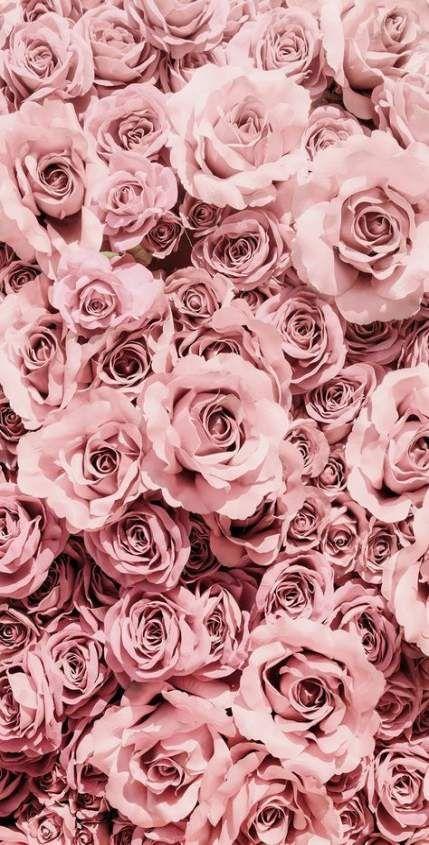 Fleurs Rosesfleurs Roses Rozovye Rozy Cvetochnye Fony Rozovye Fony